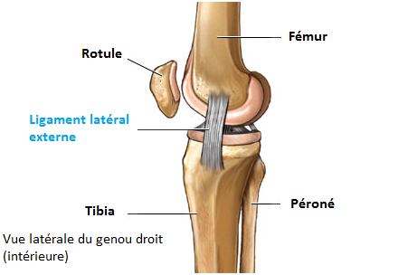 Un ligament
