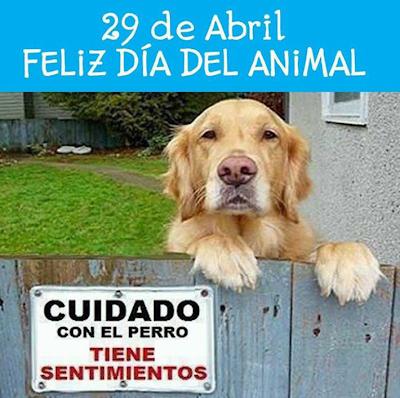 En Argentina hoy es el dia del Animal!!!!