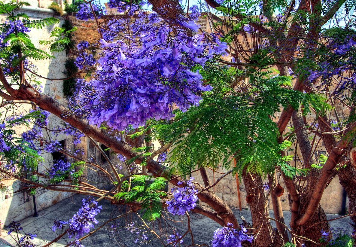 Trees Plants Flowers