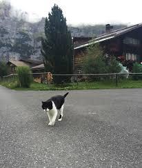 ορειβάτες ελβετικές Άλπεις γάτος
