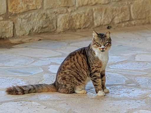 A cat from the Monastery of St. Nicholas of the Cats, Photo © A.Savin, Wikimedia Commons.