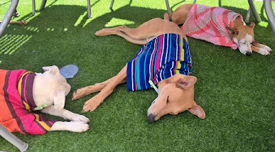 暑さにぐったりな犬