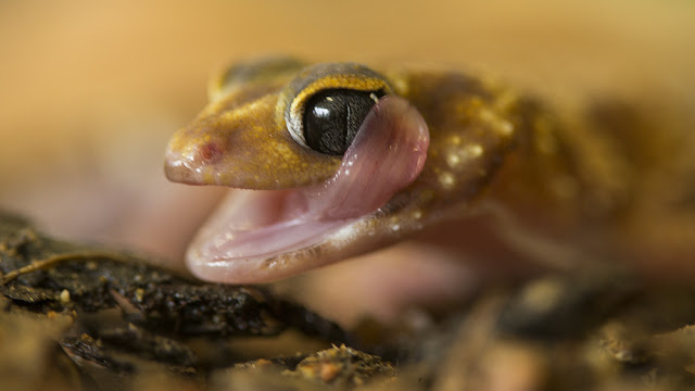 Australian study reveals mass extinction event 35 million years ago