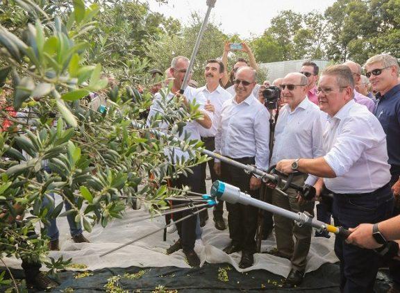 Produção de azeite extravirgem deste ano deve ser a maior já registrada no Rio Grande do Sul