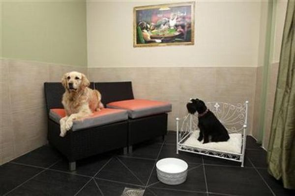 Hotels and Pets