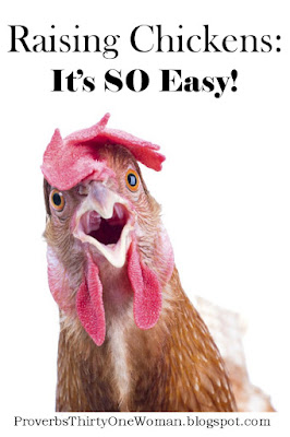 How Easy Is It to Raise Chickens Hens