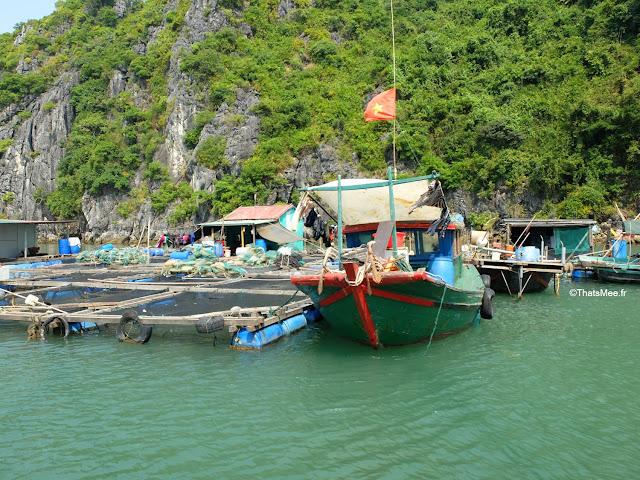pisciculture marche poissons baie halong voyage vietnam tour bateau par cat ba, mer montagne paysage vietnam
