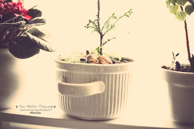 Paper Meadows Photography Blog-Plant Love- Little Fawn, little Tree-mini fairy garden