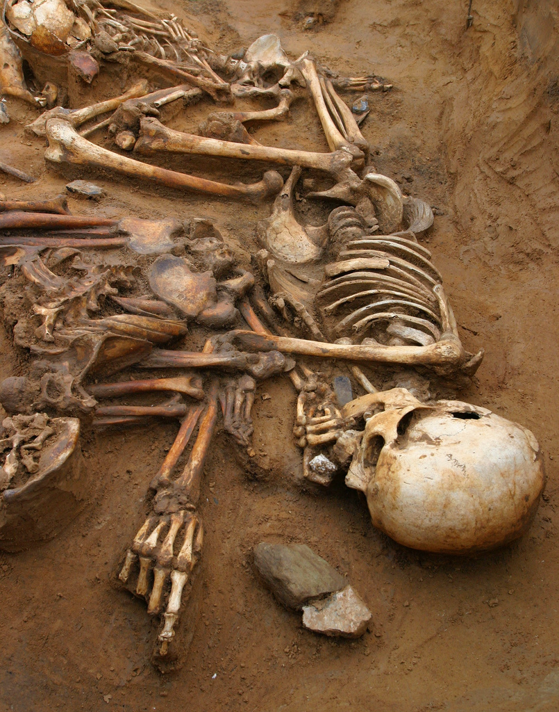 Forensic Investigation Forensic Anthropologist Salary