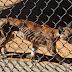 Animais em risco de extinção morrem de fome em zoo da Venezuela