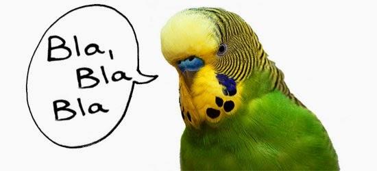 Periquito - Periquitos fala