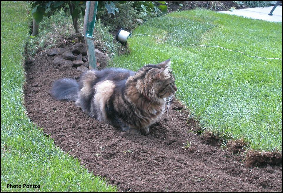Come fare aiuole in giardino du07 pineglen for Piante da aiuola