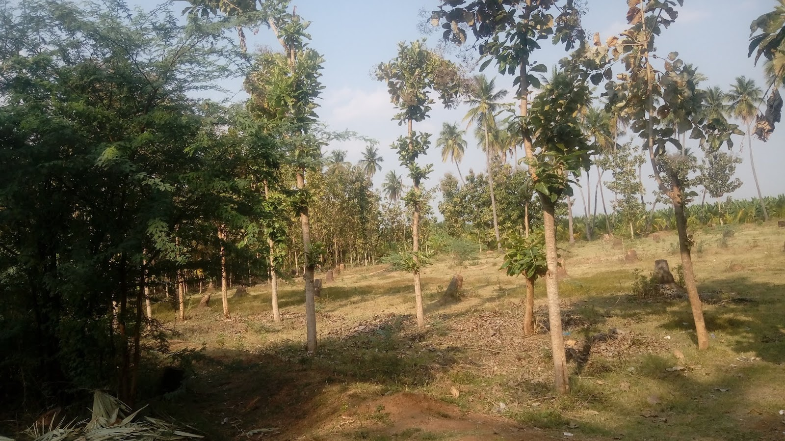 2 Acre agriculture land for sale in near sholavandan