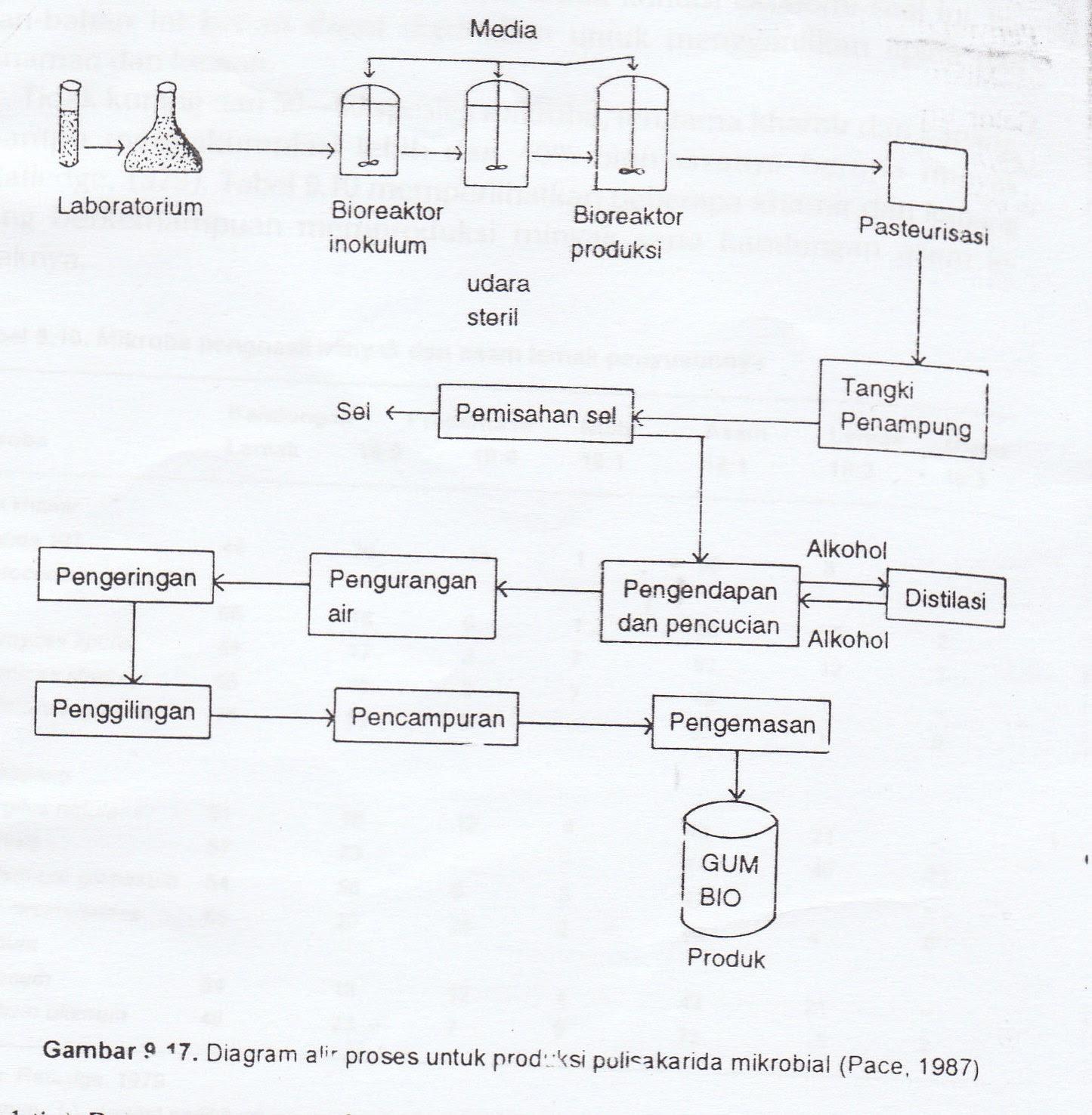 diagram for 5 gum toyota camry interior parts college note produk hasil fermentasi