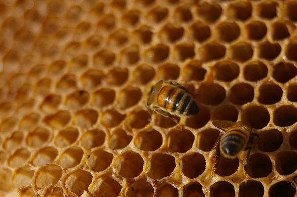 وصفة شمع النحل وزيت الورد لعلاج الأكزيما
