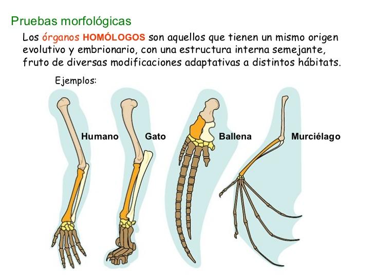 Agustina\'s things : Evidencias en biología