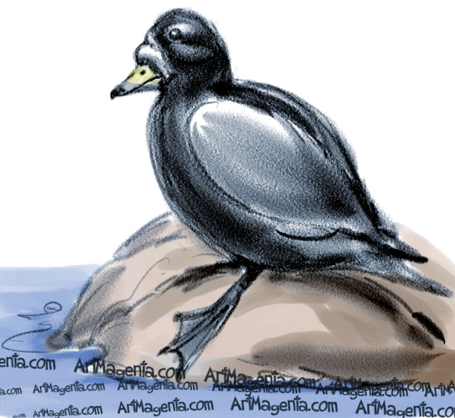 Common Scoter sketch painting. Bird art drawing by illustrator Artmagenta