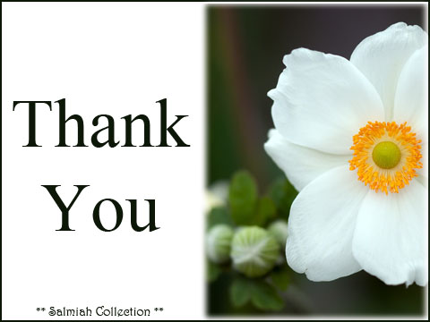 Thank You Card 33