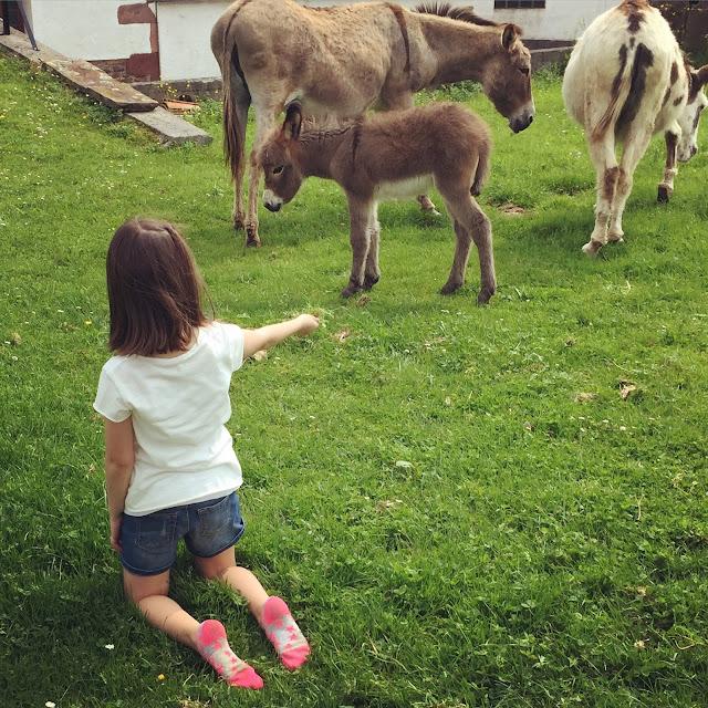 niños dando de comer a vacas