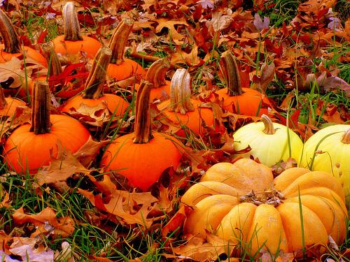 Cute Crisp Wallpapers Autumn Pumpkins Autumn Posters Picture