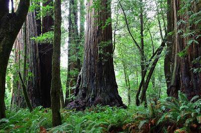 Jumlah Pohon di Bumi Ada 3 Trilyun, Benarkah?