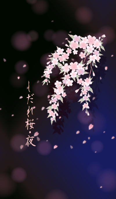 Weeping cherry blossoms night