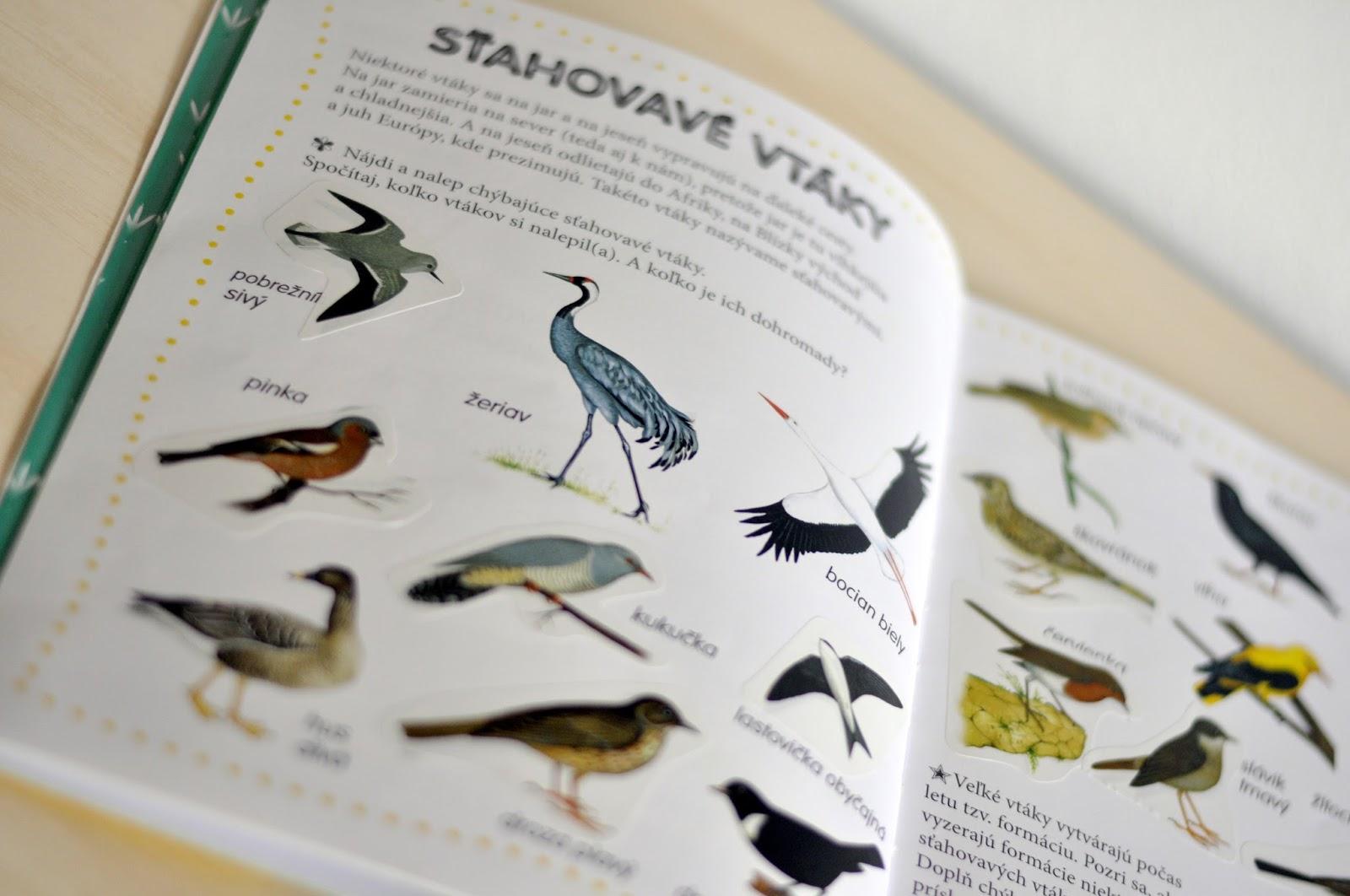 krásne veľké vtáky