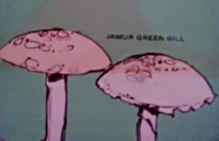 Gambar Apakah Jamur Itu Dan Kenali Jenis-Jenis Jamur