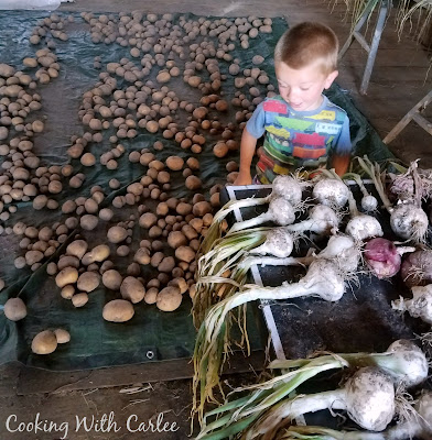 little dude between tons of freshly harvested onions and potatoes