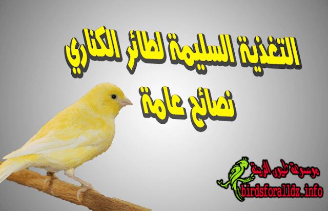 نصائح عن تغذية طائر الكناري السليمة