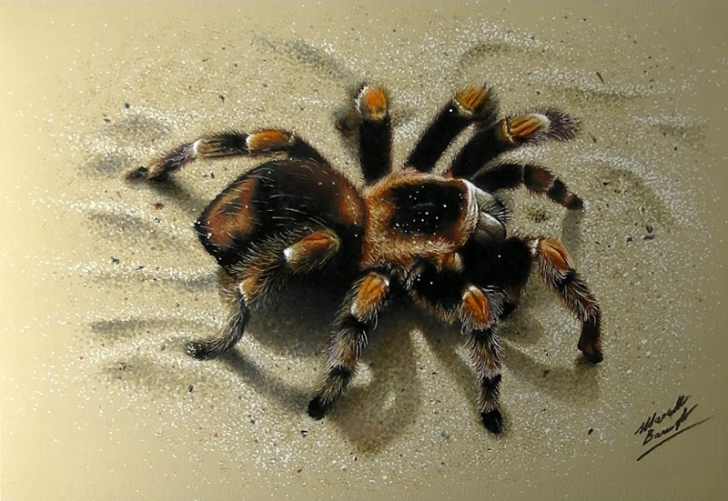 17-3D-Tarantula-Spider-Marcello-Barenghi-Exploring-Tiny-Details-of-Hyper-Realistic-Drawings-www-designstack-co