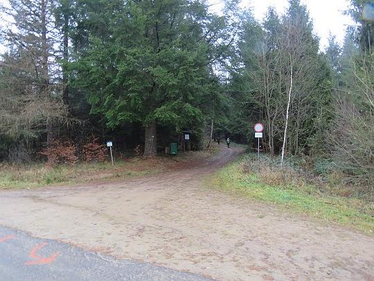 Wyjście z lasu.
