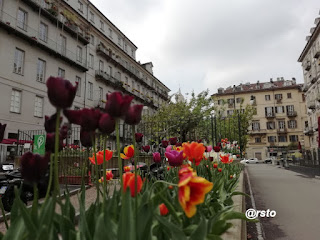 Tulipani in piazza Emanuele Filiberto