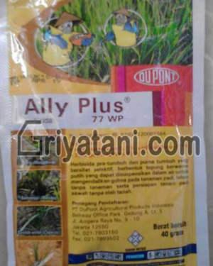 Ally Plus 77WP
