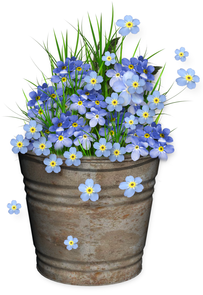 Forget Me Nots In Pots