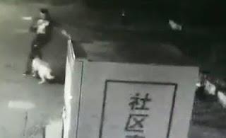 Σκύλος επιτίθεται σε αγοράκι και ο πατέρας του παλεύει για να το σώσει – Προσοχή σκληρές εικόνες