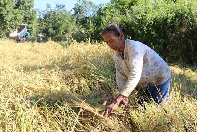 အိခ်ယ္ရီေအာင္ (Myanmar Now) ● အကူအညီေပးေနေသာ စိုက္ပ်ဳိးေရးဌာနကို အားျဖည့္ရန္ လိုအပ္