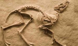 Paleontoloji Nedir?