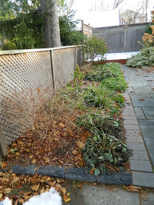 St. Clair West Village Fall Cleanup Before by Paul Jung Gardening Services--a Toronto Gardening Services Company