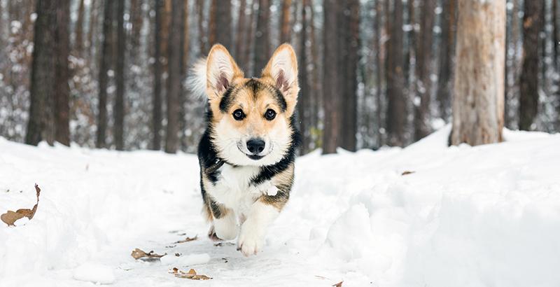 Préparer les vacances d'hiver avec son animal