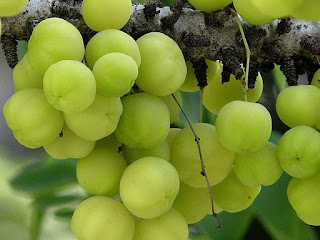 indian gooseberry images