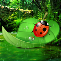 Games2Rule Ladybug Rainforest Escape