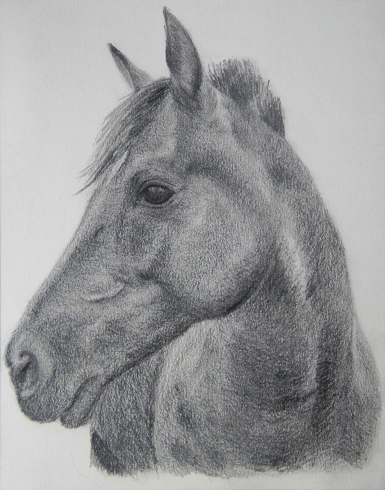 Sold-Horse original art charcoal  |Horse Art Drawings