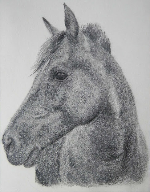 Hd Animals Wallpapers Horse Head Drawings