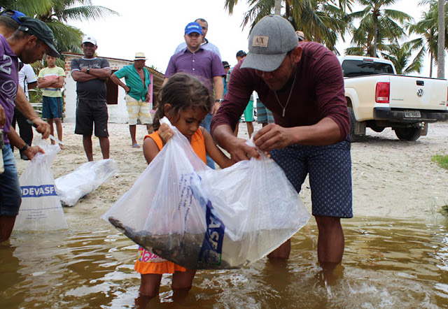 """""""Pantanal alagoano"""" recebe peixamento da Codevasf para manutenção do estoque pesqueiro"""