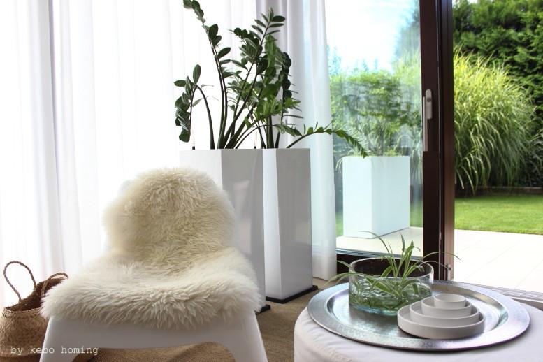 Neue Pflanzkübel by Vivanno, Pflanzenliebe Zamioculca, minimalistisches Design, Living, Interior, Whitelove auf dem Südtiroler Food- und Lifestyleblog kebo homing