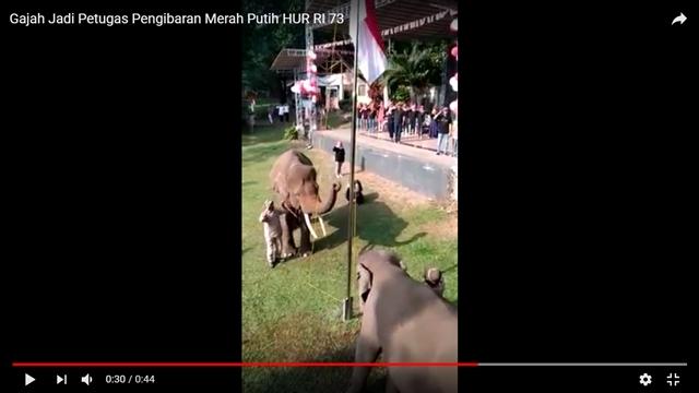 Unik, di Lembah Hijau, Pasukan Pengibar Benderanya Gajah Sumatera