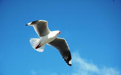kaum yang hatinya seperti hati burung