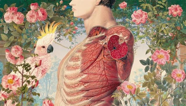 Booktag: Cuerpo humano