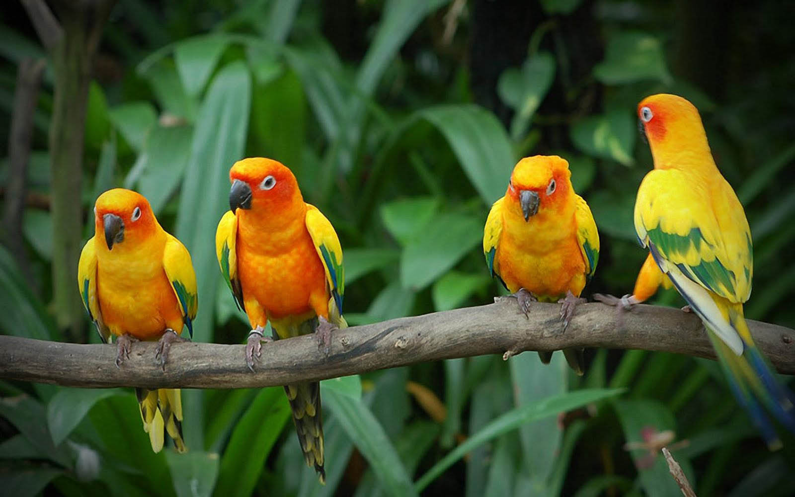 Wallpapers Love Birds: Wallpapers: Love Birds Wallpapers